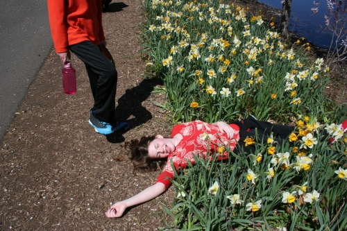 Playing dead in the daffodils.
